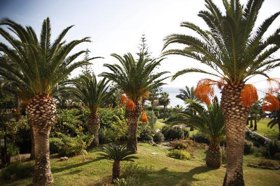 Nissi Beach Resort: Ausblick aus dem Zimmer