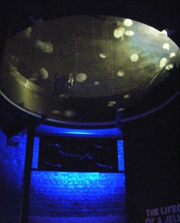 Cleveland Aquarium Picture Of Greater Cleveland Aquarium