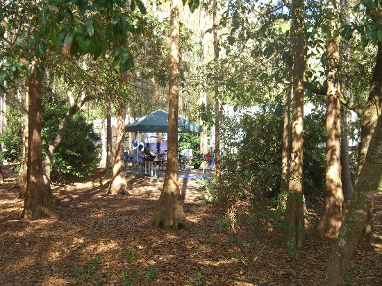 The Campsites at Disney's Fort Wilderness Resort: View of campsite in the trees