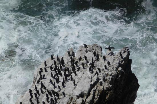 The Cape Town Tour Guide Co.: birds on a rock
