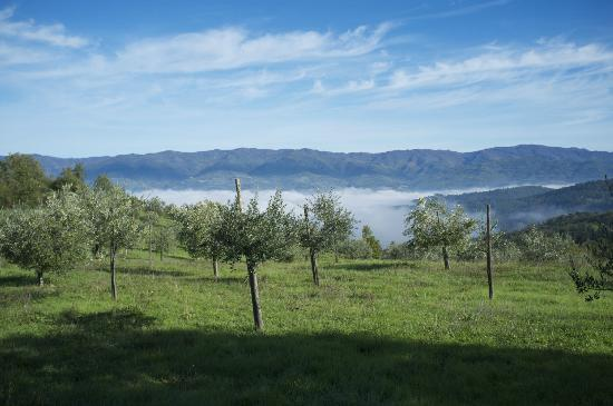 Villa Campestri Olive Oil Resort: Early morning steam rising from the Tuscan hills.