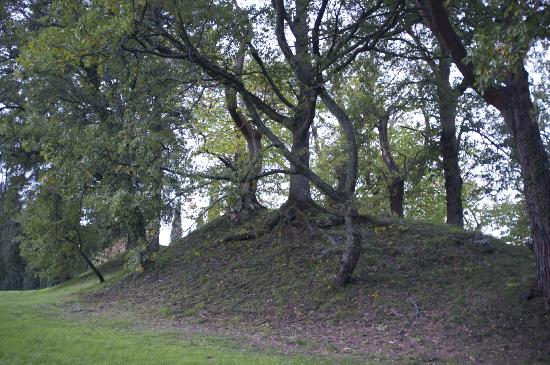 Villa Campestri Olive Oil Resort: A view of the Etruscan mound on site.