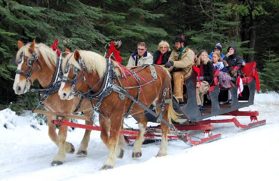 Nothing say Christmas like a horse drawn sleigh ride - Picture of ...