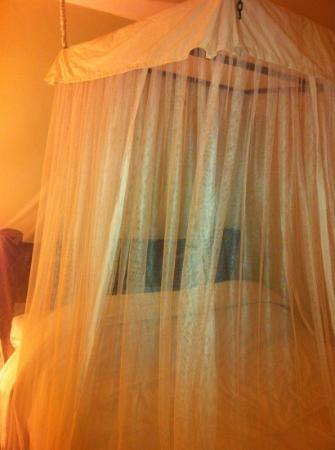 Gigiri Homestead: Heavy duty mosquito nets!