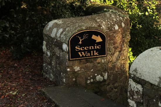 Waterford Castle Hotel & Golf Resort: Scenic Walk