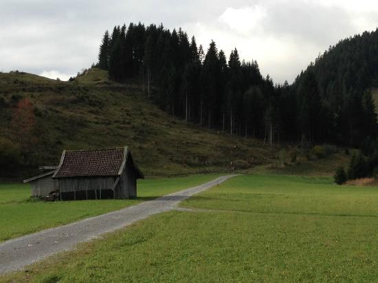 Hotel Tannenhof: Path to the mountain.