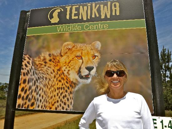 Elephant Hide of Knysna Guest Lodge: Tenikwa