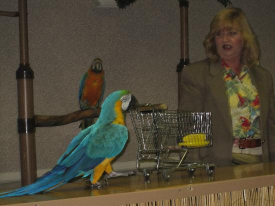 SQUAWK! The Show