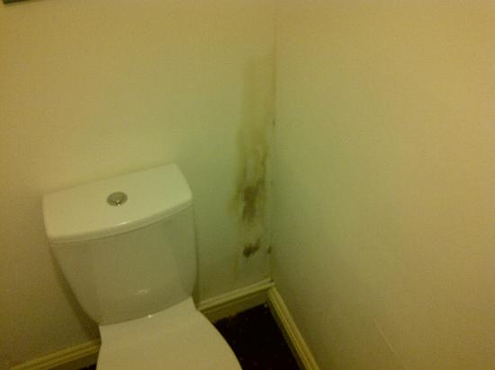 The Beeches Hotel: mould