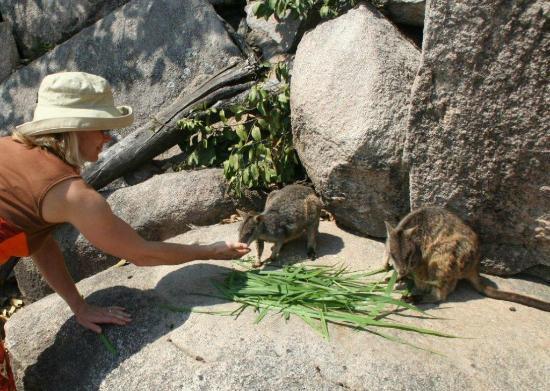 Tropicana Guided Adventure: Rock wallabies