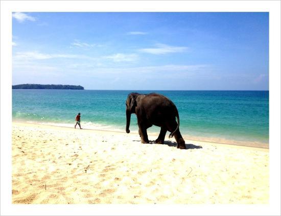 Movenpick Resort Bangtao Beach Phuket: Strand vor Hotel