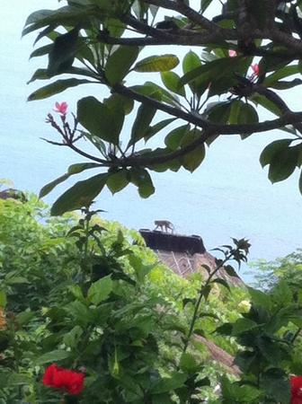 Bulgari Resort Bali: monkey on the roof