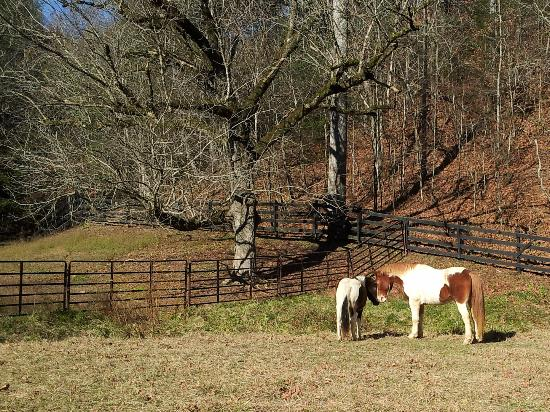 Twin Valley Bed and Breakfast and Horse Ranch: Two Horses in the pasture