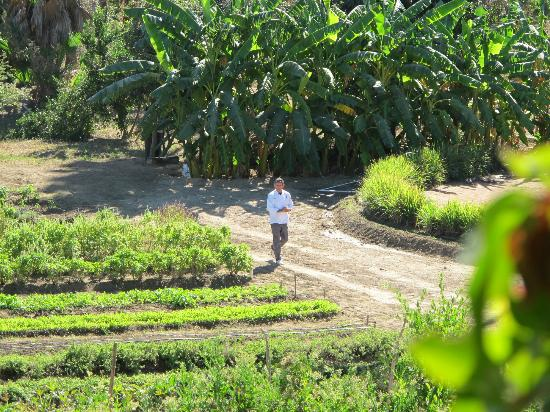 Organic Restaurant at Huerta Los Tamarindos: Chef Enrique coming in from the garden with 2 handfuls of veggies to prepare