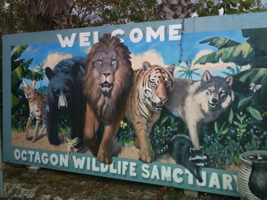 Octagon Wildlife Sanctuary And Rehabilitation Center: Octagon Wilderness Santuary