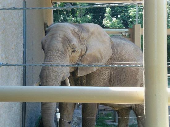 Seneca Park Zoo: Elephant