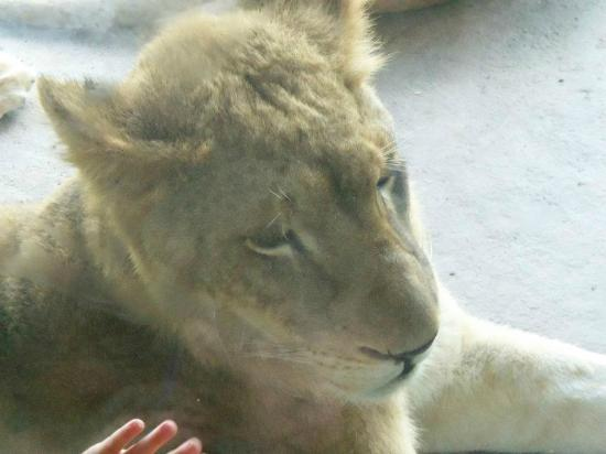 Seneca Park Zoo: She was right there!!