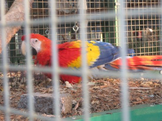 Ashmore Palms Holiday Village: The beautiful Macaw