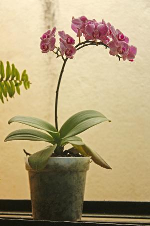 Afonso Guest House: Rooftop orchid garden