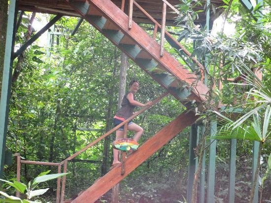 Tree Houses Hotel Costa Rica: walking up the steps to our treehouse castle!