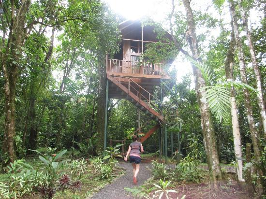 Tree Houses Hotel Costa Rica: Our treehouse :)