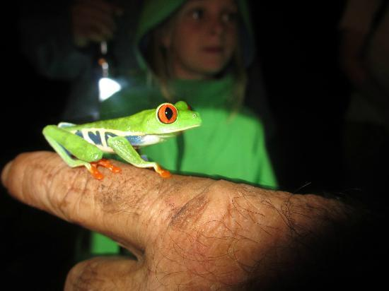 Tree Houses Hotel Costa Rica: Tree frog on night tour