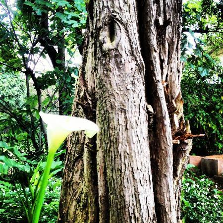 โรงแรมเท็นบอมพาส: Birthday in the Garden... Natural beauty_SRF111112