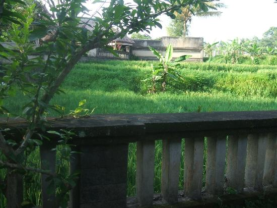 The Ubud Village Resort & Spa: view of the rice fields