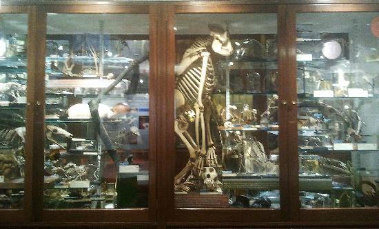 Grant Museum of Zoology: vitrine