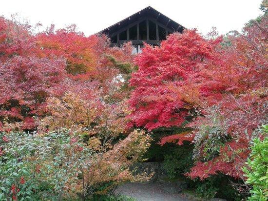 Restaurantes: Oyamazaki-cho