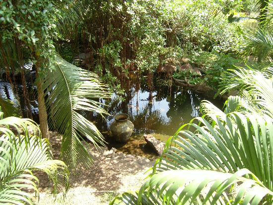 Siam Bayshore: the ponds are stocked with fish, these are in the hotel and not in the grounds