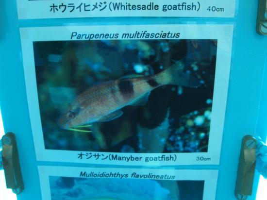 Miyakojima Marine Park: おじさん