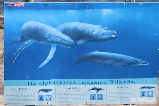 Harbour Vue Guest House: Three different whale species visiting these waters