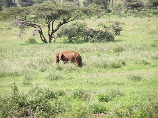 Samburu Simba Lodge: esto es lo que podemos contemplar desde nuestra habitación