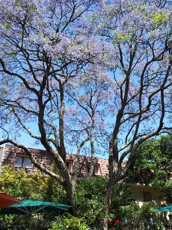 Protea Hotel by Marriott Johannesburg Balalaika Sandton: pretty grounds