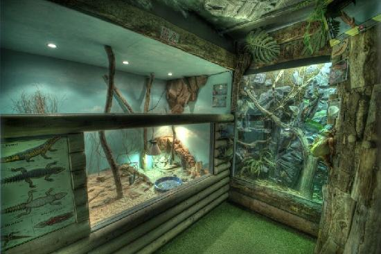 Reptile World New Quay: some of our enclosures