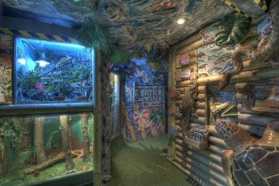 Reptile World New Quay: packed with educational material!