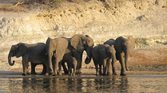 Sanctuary Chobe Chilwero: elephants at the river