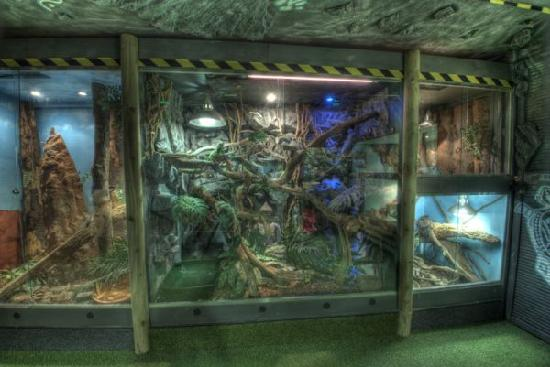 Reptile World New Quay: enclosures
