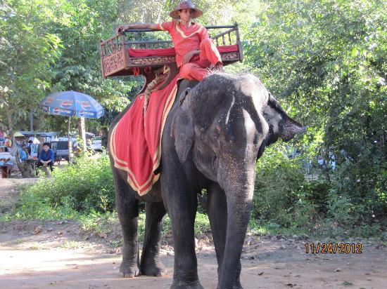 Angkor Wat: Elephant Rides to View Sunset