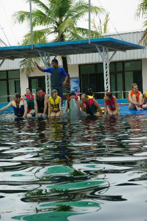 water park - Picture of Pattaya Dolphin World, Pattaya - TripAdvisor
