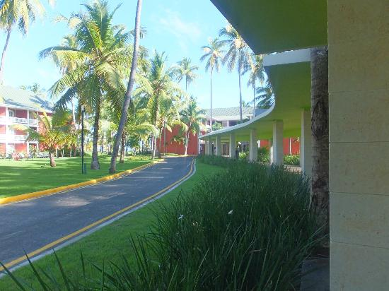 Barcelo Bavaro Beach - Adults Only: groud
