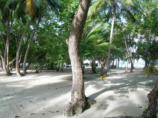 คลับเมดคานิ:                   spiaggia