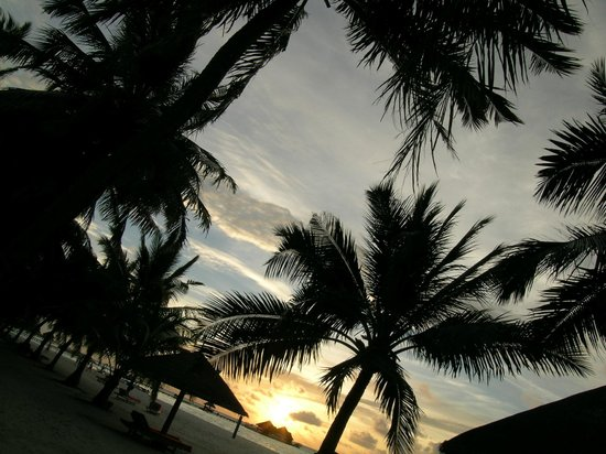 Club Med Kani:                   palme