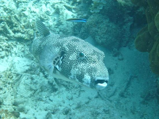El Nido Resorts Pangulasian Island: Something large, spotted by our snorkle guide