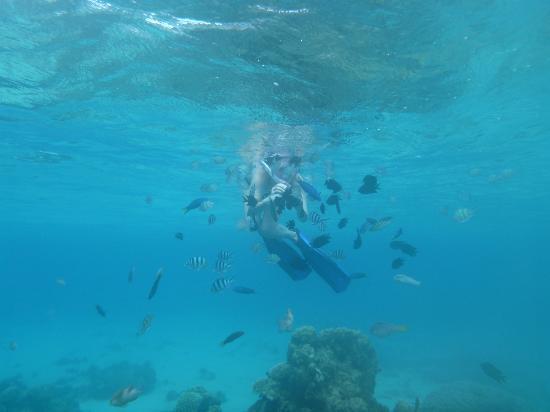 El Nido Resorts Pangulasian Island: Fish nibbling fingers, the reef at Pangulasian