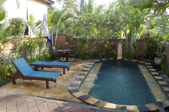 Kubu Balian Beach Bungalows : The plunge pool
