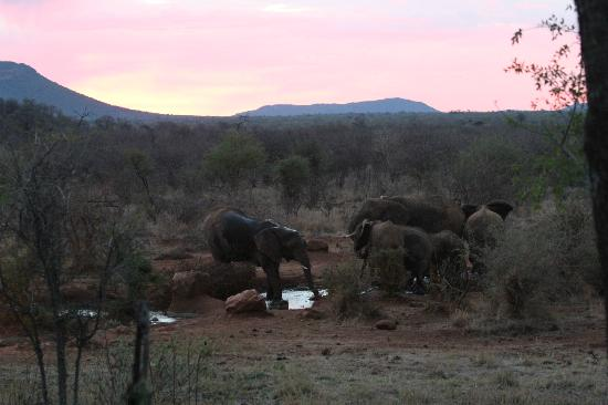 Etali Safari Lodge: Elephant herd on first night at the Etali watering hole