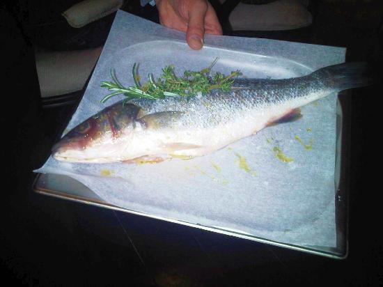 Divinis Fisch