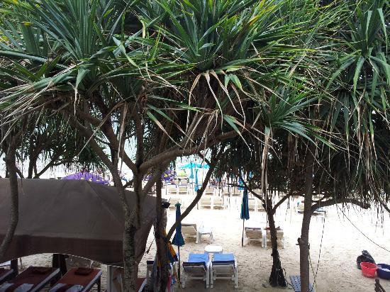 patong bay garden hotel reviews. patong bay garden resort: view of the beach hotel reviews